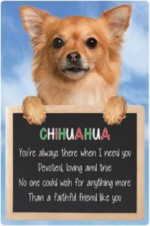 Chihuahua 3D home hang up sign